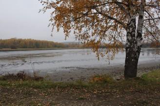 rybník vylovený bříza krajina