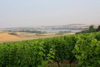 vinice - rybník Nesyt - IMG_9644