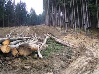 ČIŽP kácení lesa eroze