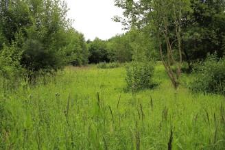 mýtina les - IMG_8692