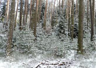 sníh les Lesy ČR