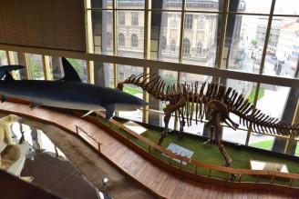 Národní muzeum - Archa Noemova - výstava