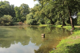 rybník - IMG_3420