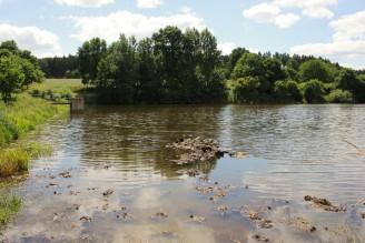 rybník znečištění hnůj - IMG_8932