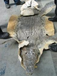 ČIŽP - krokodýl pašeráci