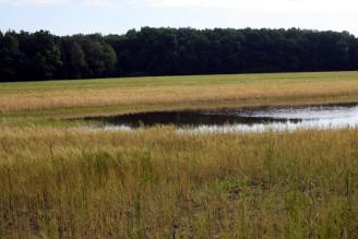 Povodeň - zatopené pole - IMG_3215