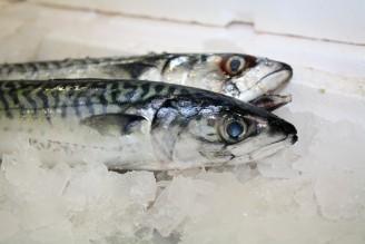 makrela led