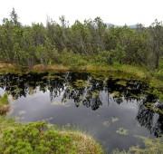 Šumava - rašeliniště - DSCN8513