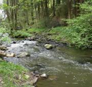 drobný vodní tok - IMG_9357