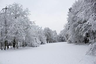 Hostivařský lesopark - zima březen 2016 - IMG_2964