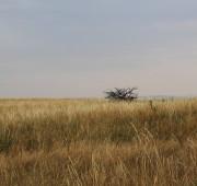 krajina - Morava - sucho