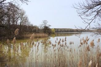 Pernštejnské rybníky - IMG_6234
