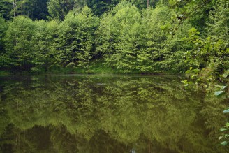 krajina rybník - IMG_3061 Kozmice