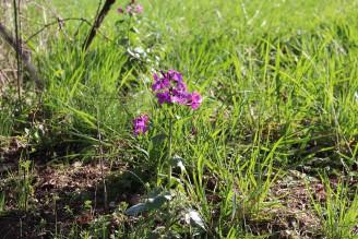 louka květy - IMG_4732