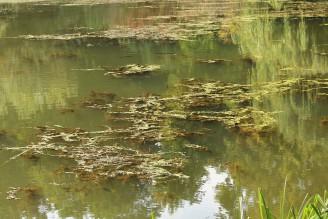 rybník krajina 2