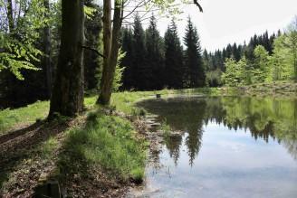 rybník les - IMG_6302