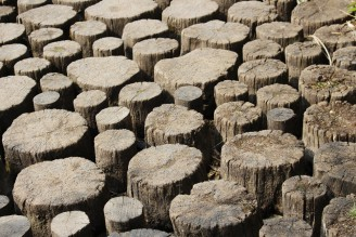 sucho - dřevo - IMG_6726