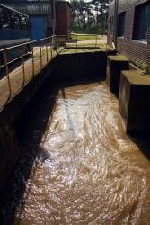 čištění voda - IMG_4494