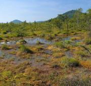 Geopark Ralsko - rašeliniště Doksy swamp