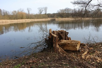 rybník - IMG_6300
