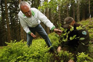 KRNAP sazenice sázení stromků