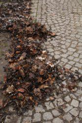 odpad listí chodník - IMG_0839_U