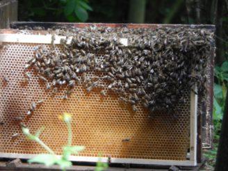 včely - DSCN1126