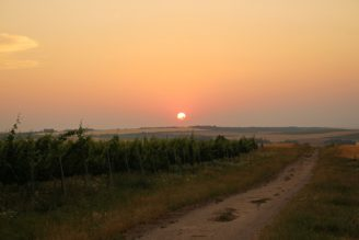 vinice - západ Slunce - IMG_9675