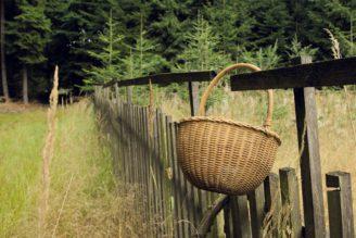 les - košík houby - smrk - IMG_2239_U