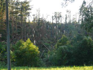 Lesy ČR - poškozené porosty