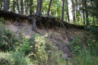 eroze kořeny - IMG_8776
