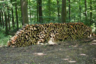 dřevo - pokácené - IMG_0294