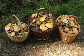 houby-kosiky