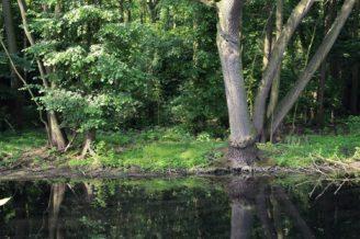 les-potok-voda-krajina-img_8250