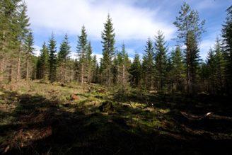 dira-v-lese-np-sumava