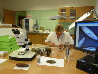 lesy-cr-kontrola-kvality-osiva-semena