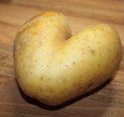 brambory 2 - IMG_1521