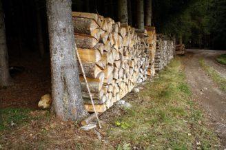 dřevo těžba - IMG_8318