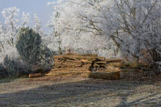 drevo-zima-jinovatka-img_1757
