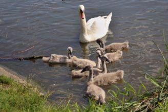 labut-rodina-mladata-img_8392