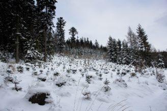 sníh les zima 2017