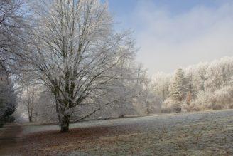 zima-jinovatka-stromy-img_1727