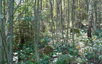 Dvoufázová obnova lesa 3 - VÚLHM