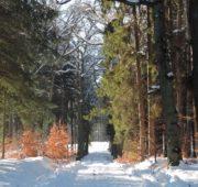 Lesy ČR - foto lesy Hrubá skála