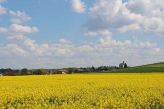 krajina - řepka - obec - IMG_8371