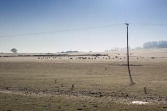 krajina ovce zima pastva - IMG_0241