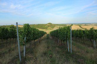 vinice Morava - IMG_0429_zmens