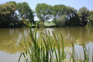 rybník rákosí krajina - IMG_8179