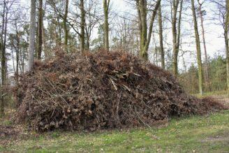 biomasa - ořezaný strom v lese - IMG_6197