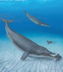 pravěká velryba